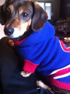 Oscar loves to cheer for the Habs. Thanks Twitter fan @brandy11__ for the photo. #HockeyPets