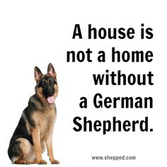 Comment if you have a German shepherd I do her name is Selena the puppy in my profile pic she got bigger though♥♥♥