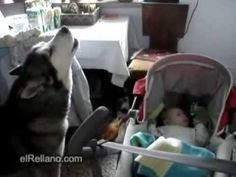 This Baby Wouldn't Stop Crying. Just Watch What This Dog Does!