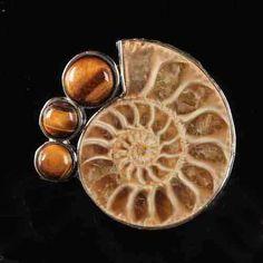 Beautiful Ammonite Fossil Earrings .925 Sterling Silver