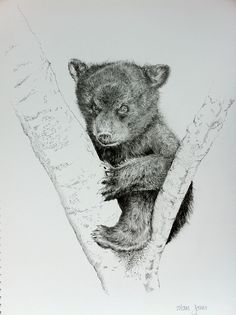 bear cub drawing - Google Search