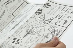 Branding and Packaging Design of Japanese Rice – MORINOIE