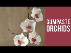 How to Make a Gum Paste Orchid - YouTube