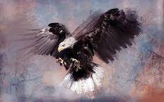 eagle attack - Szukaj w Google
