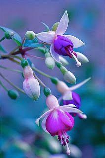 nature Superbe: Fleurs