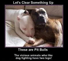 Sweethearts and snugglers~ Let's clear something up - These are Pit Bulls. The VICIOUS animals who like dog fighting have two legs! Precious puppies, one and all...
