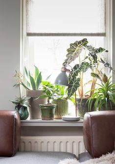 Planten bij Miriam en Andre uit aflevering 3, seizoen 6 | Make-over door: Marianne Luning | Fotografie Barbara Kieboom