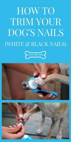 How To Cut Your Dog's Nails (Without Being Afraid) | How To Cut White Nails | How To Cut Black Nails | Dog Grooming Tips |