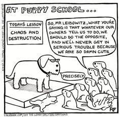 dog trainer beware