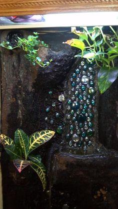 Reptile Terrarium, Terrarium Diy, Terrariums, Crested Gecko, 55 Gallon, Vivarium, Reptiles And Amphibians, Animals Beautiful, Habitats