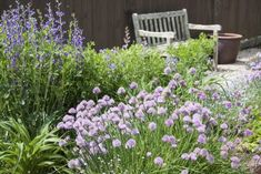 Chive Companion Plants – Companion Planting With Chives In The Garden Schnittlauch-Begleiterpflanzen Strawberry Companion Plants, Rose Companion Plants, Companion Planting Chart, Companion Gardening, Container Gardening Vegetables, Planting Vegetables, Planting Plants, Vegetable Gardening, Veggie Gardens