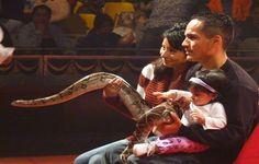 Sari Express Travel » Crocodile and Snake Show in Sharm el Sheikh