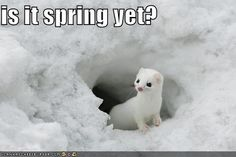 Hang in there, SPRING is almost here! Happy first day of March!