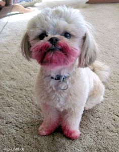 «Ton rouge à lèvres? Quel rouge à lèvres?» | 14 chiens qui ne vous attendaient pas si tôt