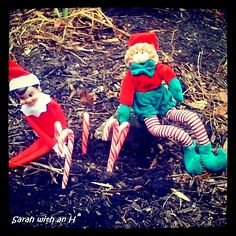 Have the kids bury peppermints...the next morning they will see that they grew into Candy Canes!! #elfontheshelf