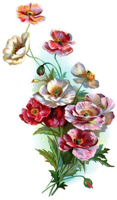 vintage poppies temporary tattoo by pepperink on Etsy.  I think this would make a great permanent tat!