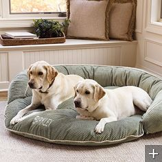 Ready for Copper to have another puppy to play with they can share a bed :] Golden Labrador, Dog Area, Bolster Dog Bed, Dog Beds, Fur Babies, Pet Dogs, Labrador Retrievers, Puppies, Labradors
