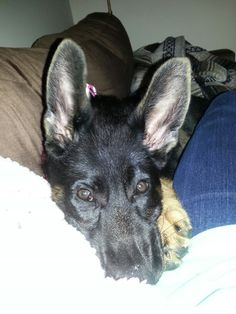 Might grow into those ears!