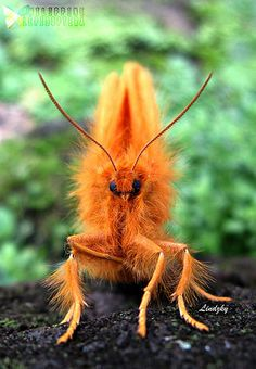 MONKEY MOTH, Eupterote radiata (Eupterotidae; Eupterotinae)   by Lin N Lem Allsto