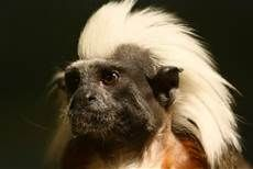 Primate Monkey Hand - Yahoo Image Search Results