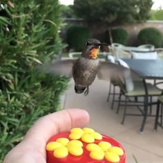 Hand feeding a hummingbird ? Pretty Birds, Beautiful Birds, Animals Beautiful, Cute Funny Animals, Cute Baby Animals, Funny Birds, Cute Creatures, Beautiful Creatures, Nature Animals
