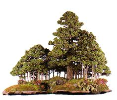 Brilliant Bonsai Forests – Quality Bonsai Tools, Wire & Much More | Bonsai Bark