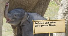 Zoo Zürich is worth a visit, especially now when the elephants got a new, bigger place!