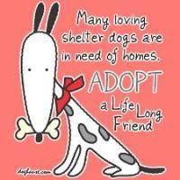 ADOPT a shelter dog!