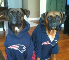 Everybody needs a good Belichick hoodie...