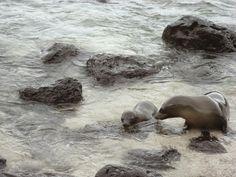 Sea lions😄😍 Galápagos