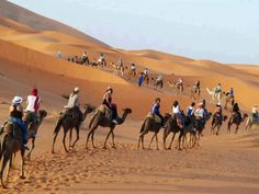 To enjoy a Camels Riding amidst the huge expanse of the desert, Sahara is the best place to enjoy.
