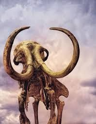 Art print POSTER CANVAS Woolly Mammoth Replica at Museum Exhibit