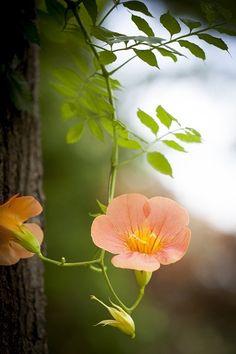 It's a beautiful world! ❥‿↗⁀simply-beautiful-world Beautiful Flowers Garden, Pretty Flowers, Peach Flowers, Peach Colors, Coral Color, Simply Beautiful, Beautiful World, Color Splash, Fleur Orange
