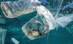 Did you know that marine plastic pollution costs the world up to trillion dollars every year? Environmental Psychology, Environmental News, Environmental Degradation, Ocean Pollution, Plastic Pollution, Plastic In The Sea, Plastic Problems, Save Our Earth, Save Our Oceans
