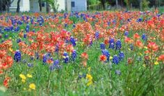 Wildflowers and Rosé picnic ideas