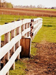 Fence line 2