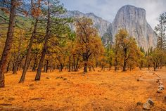 Walk in Yosemite By LeeAnn McLaneGoetz McLaneGoetzStudioLLC.com  Yosemite Valley is a glacial valley in Yosemite National Park in the western Sierra Nevada mountains of California, carved out by the Merced River. #California,#Yosemite