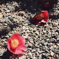 春の光 冬の終わり    by mon_ami_2000