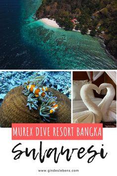 Murex Dive Resort Bangka - Tauchresort im Norden von Sulawesi Jimbaran Bali, Bangka Island, Ubud Hotels, Dive Resort, Big Island Hawaii, Koh Tao, Snorkeling, Southeast Asia, Trekking