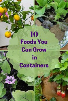 You can grow any one of these fruits, vegetables or berries in a container on your porch. From lemons to eggplants, grow your own food, even without a garden!