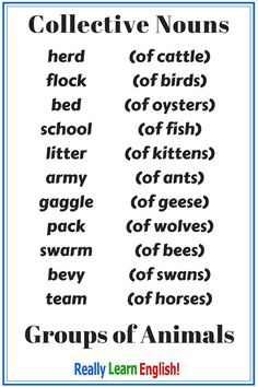 Learn English for free! There are many nouns in English. Nouns can either be singular or plural. It is usually easy to create plural nouns in English, but there are some exceptions. In this lesson, you will learn about collective nouns (group nouns).