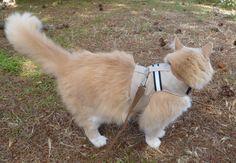 Safety Cat Harness: Khaki with Reflective Ribbon by ScotsPlace