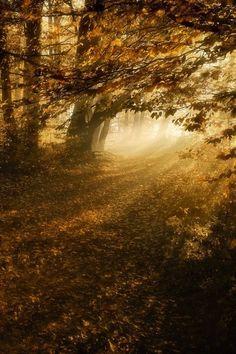 Inspiration Lane, girlyme: (via Autumn)