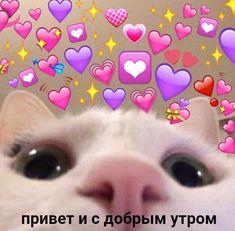 Cute Cat Memes, Cute Animal Memes, Cute Love Memes, Cute Animals, Funny Memes, Cute Anime Wallpaper, Cat Wallpaper, Cute Cartoon Wallpapers, Kittens Cutest