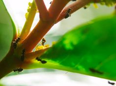 Ants going about their daily business