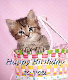 Happy Birthday Kitten, Happy Birthday Wishes For A Friend, Cat Birthday, Birthday Love, Animal Birthday, Happy Birthday Pictures, Happy Birthday Quotes, Happy Birthday Greetings, Happy Birthday Beautiful Daughter