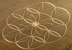 The truth about crop circles Sacred geometry Geometric Trees, Geometric Mandala, Geometric Symbols, Geometric Designs, Geometric Shapes, Crop Circles, Proportions Du Corps, Nazca Lines, Seed Of Life