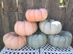 #pink pumpkin patch Types Of Pumpkins, Pink Pumpkins, Painted Pumpkins, Vintage Fall, Shabby Vintage, Pink Fall Weddings, Pumpkin Colors, Thanksgiving Decorations, Fall Decorations
