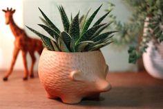 La cerámica es la protagonista indiscutida de las diminutas y divertidas macetas de Paraná Vivero.