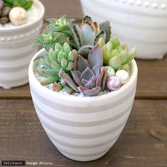 Cute little mini pots of succulents!